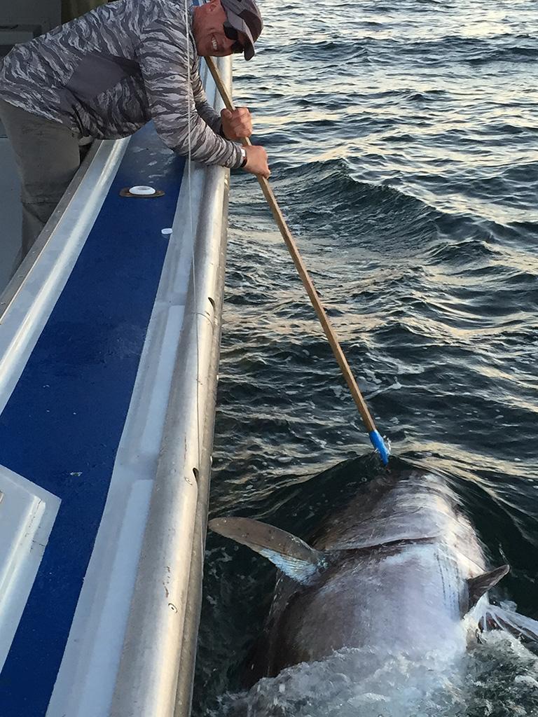 2016 pei tuna fishing season is almost here best prince for Tuna fishing season