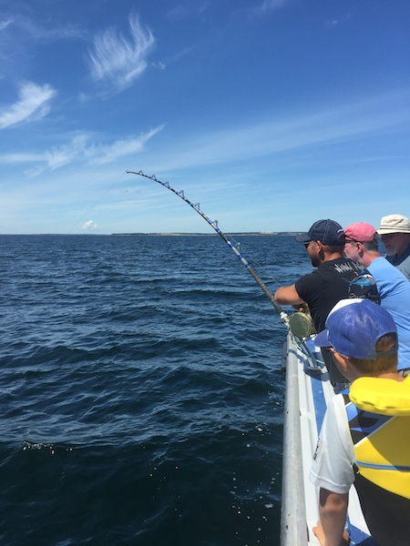 Tuna fishing season underway best prince edward island for Tuna fishing season