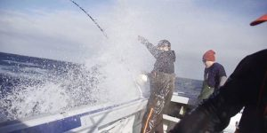 Giant bluefin tuna fishing video with Roadfish!